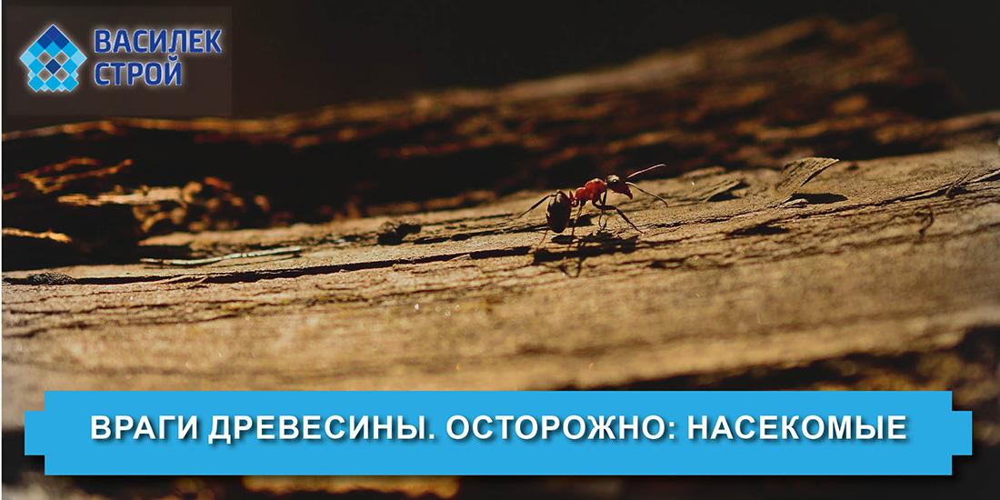 Враги древесины. Осторожно: насекомые